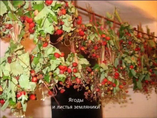 Ягоды и листья земляники