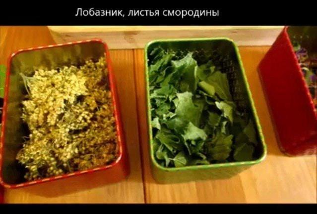 Лобазник и листья смородины